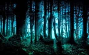 forests-family-trees-artprofiler